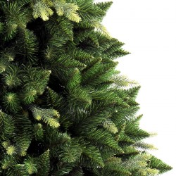 Caucasian Fir Christmas Tree