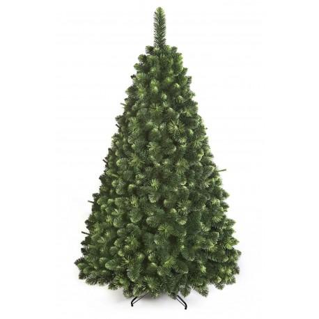 Young Pine Christmas Tree