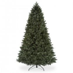 Himalayan Pine
