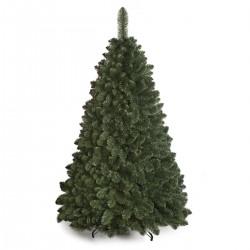 Caucasian Fir Christmas Tree